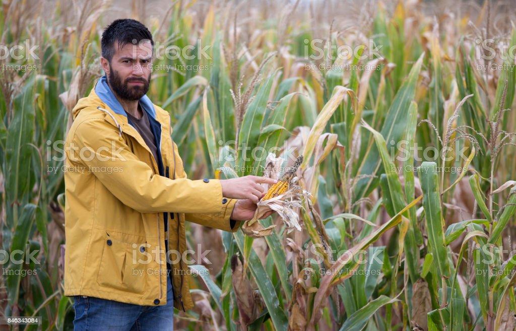 Farmer in corn field stock photo
