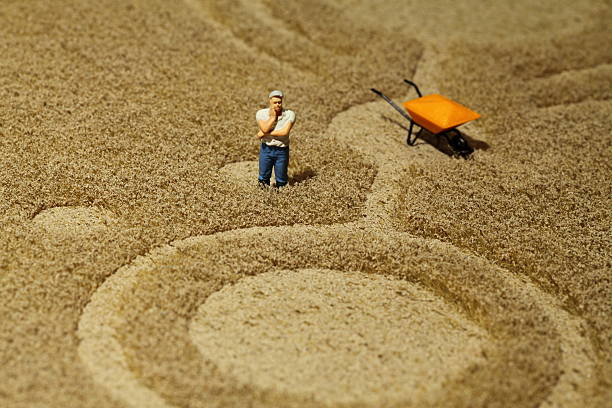 Farmer in crop circle  pejft stock pictures, royalty-free photos & images