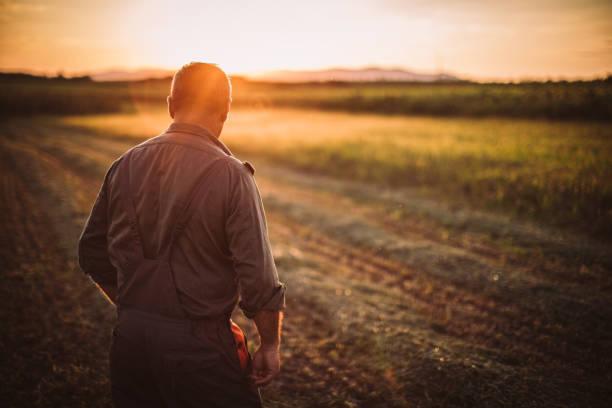farmer in feld - farmer stock-fotos und bilder