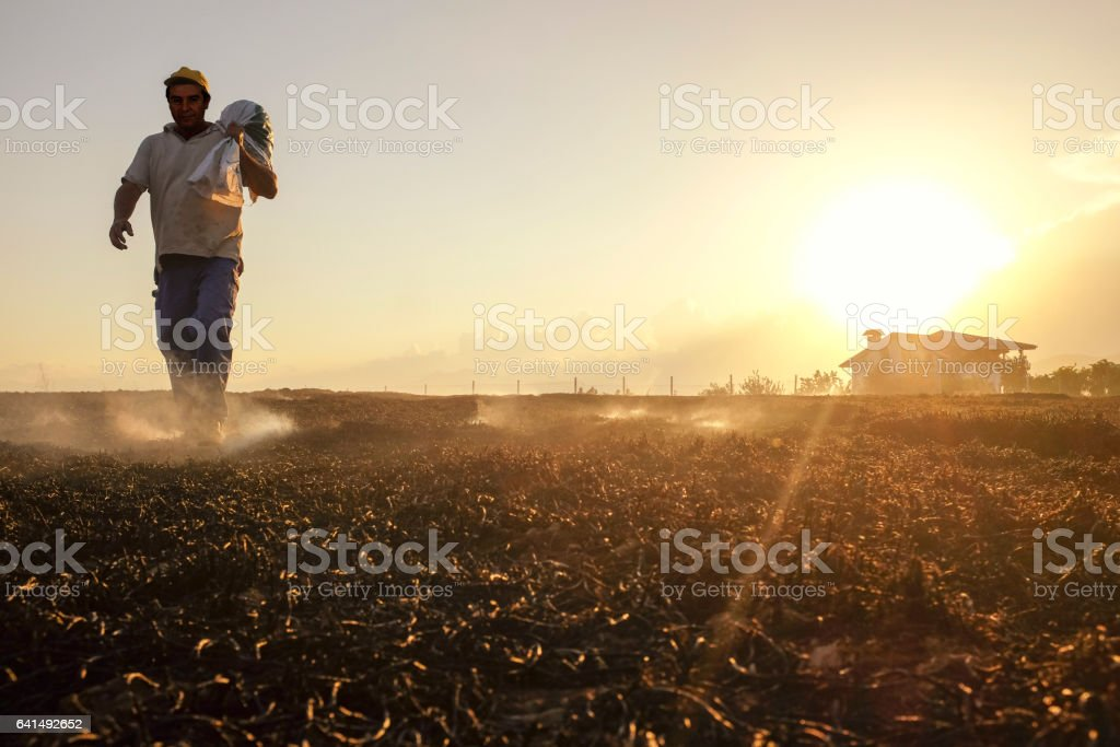 Agriculteur dans le champ - Photo