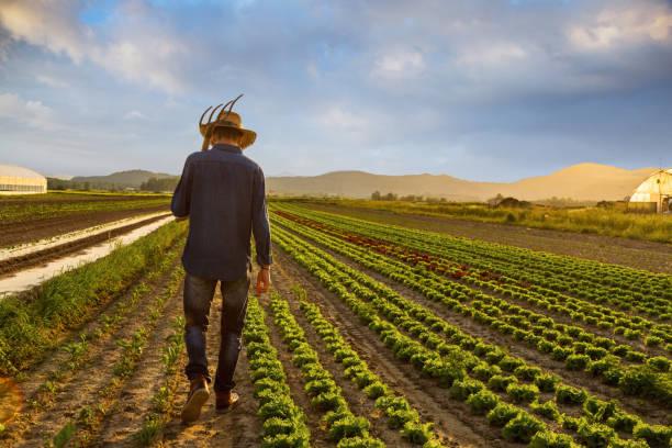 Farmer in Feld – Foto