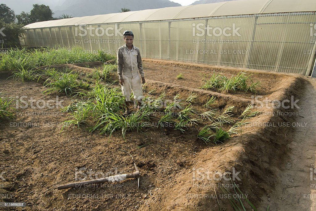 Farmer In Front Of A Green House In Musandam Oman Stock