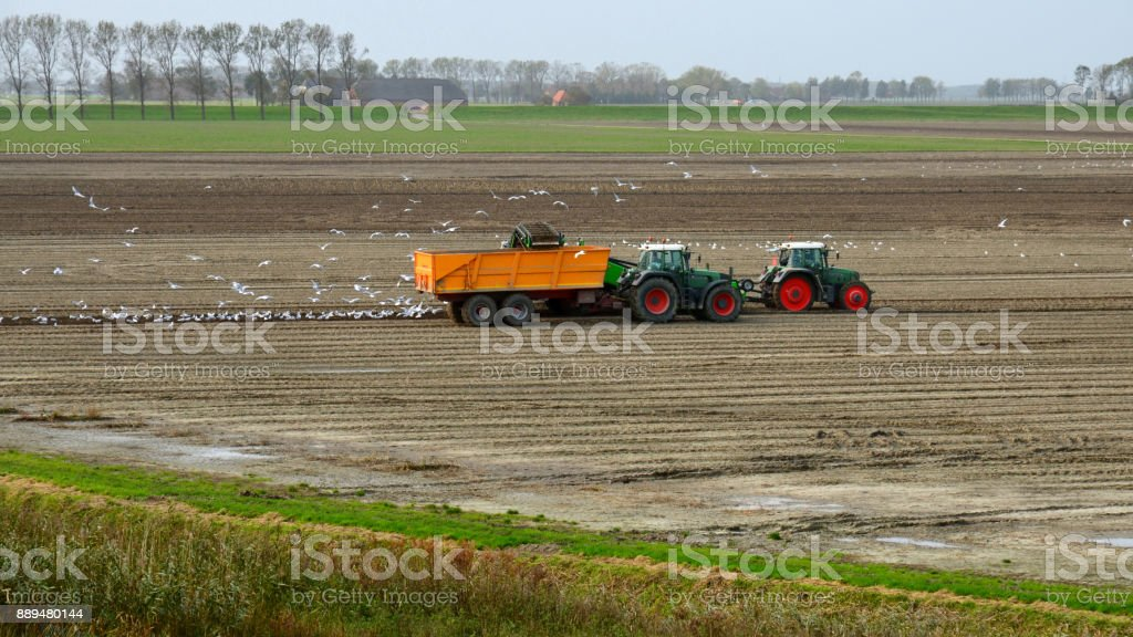 Farmer in Groningen raises potatoes stock photo