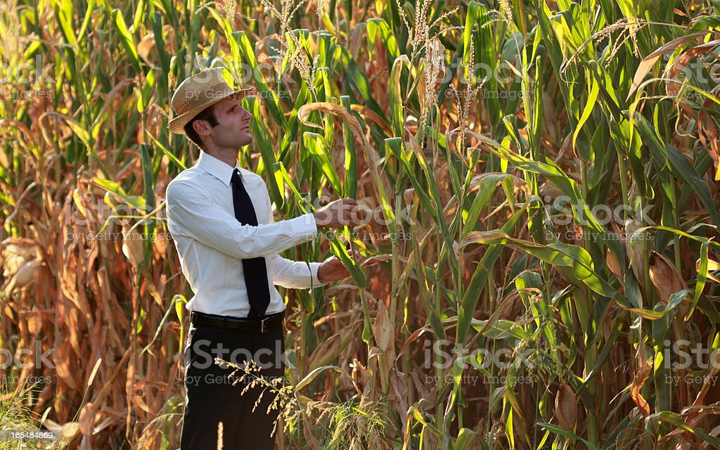 Farmer in his own cornfield stock photo