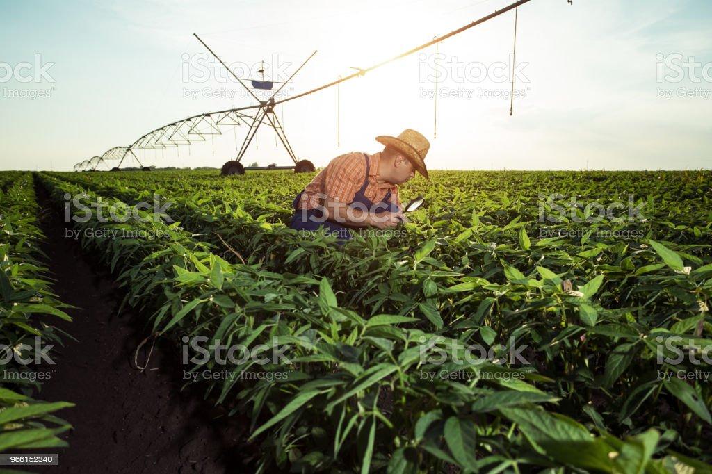 Landwirt in Pfeffer-Felder - Lizenzfrei Agrarbetrieb Stock-Foto