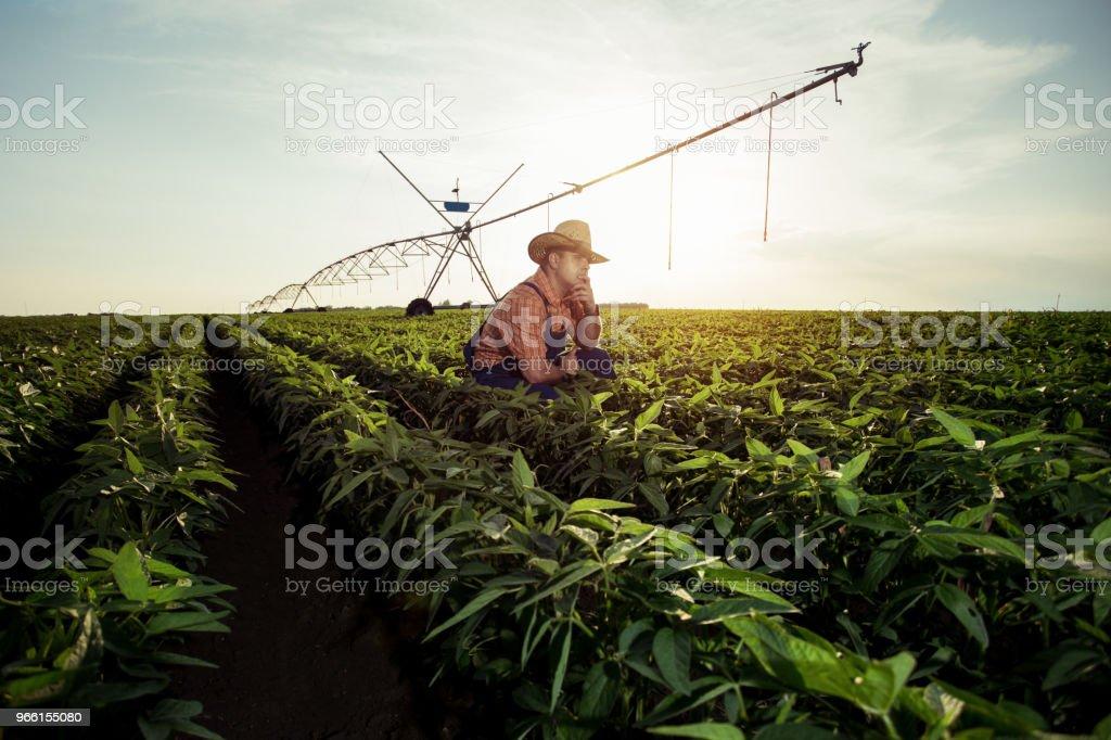 Agricultor en los campos de pimienta - Foto de stock de Adulto libre de derechos