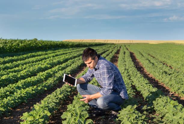 agricultor no campo de soja com tablet - agricultor - fotografias e filmes do acervo