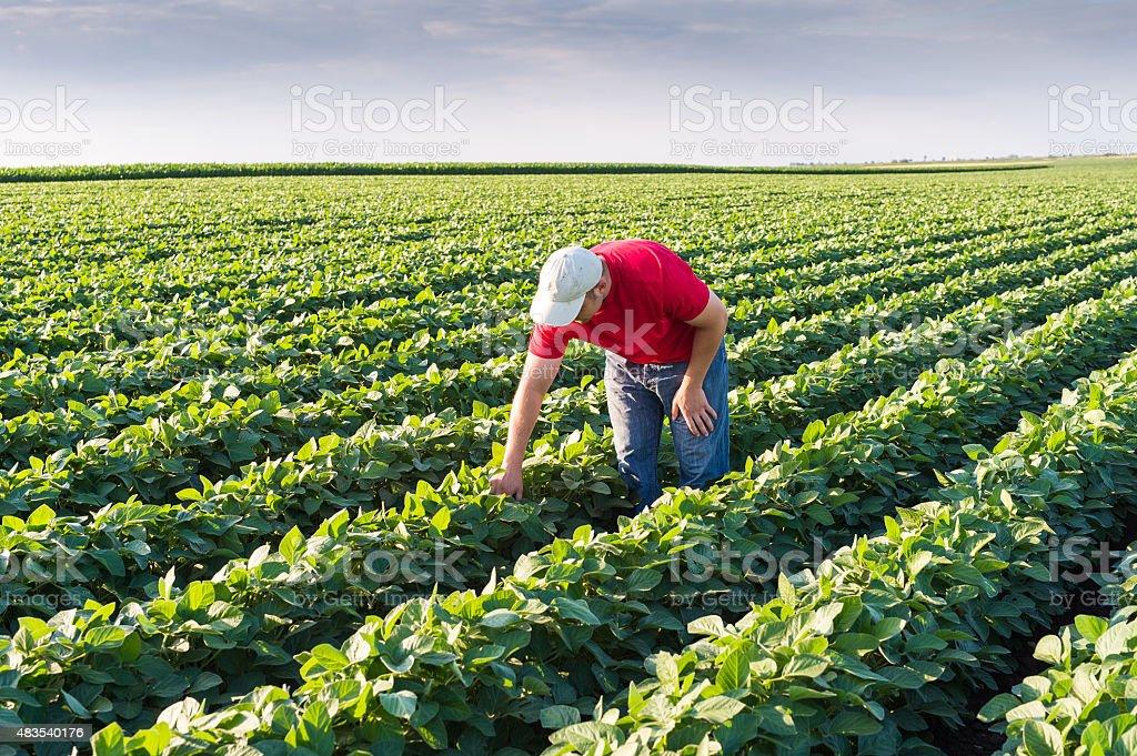 farmer in Sojabohne Felder – Foto
