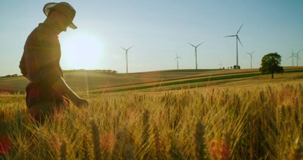 Farmer in straw hat in wheat field stock photo