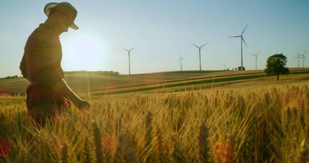 Landwirt in Strohhut im Weizenfeld – Foto