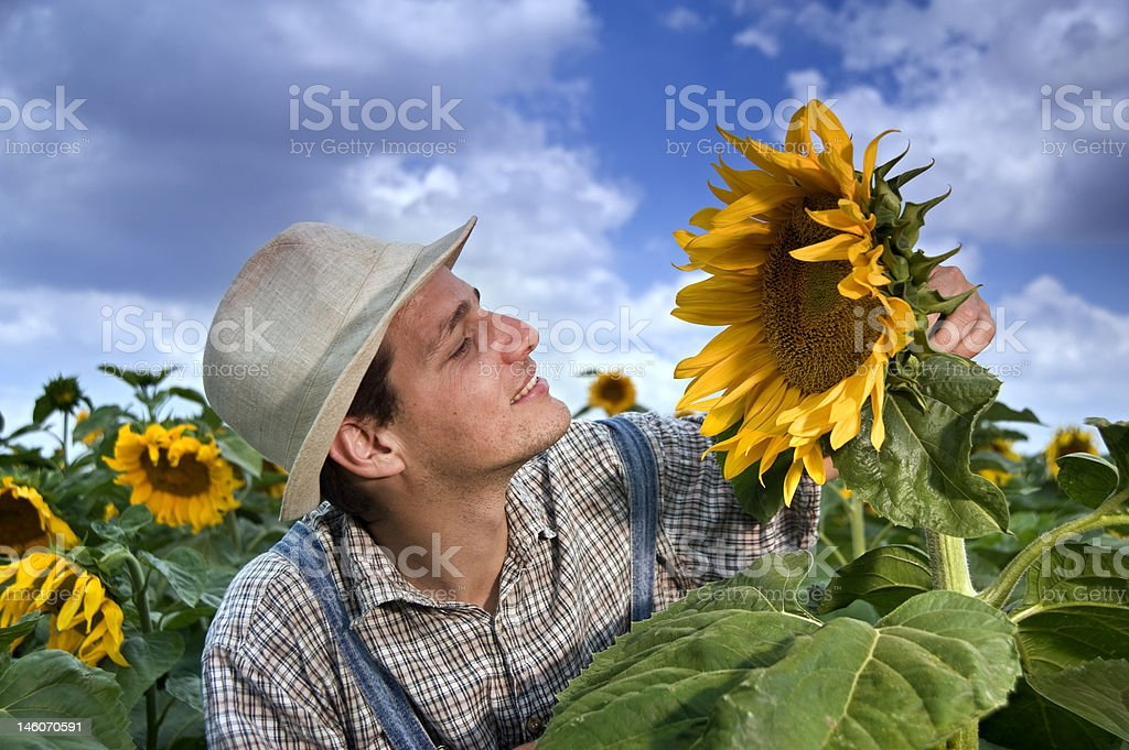 farmer in sunflower field with clouds royalty-free stock photo