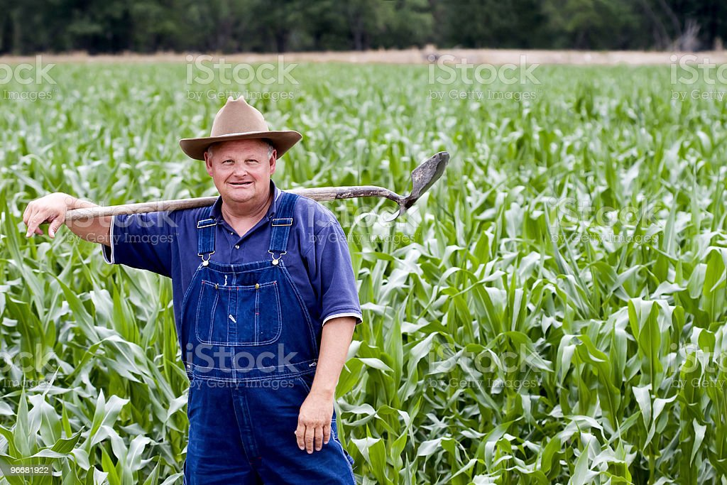 Farmer in the corn fields stock photo