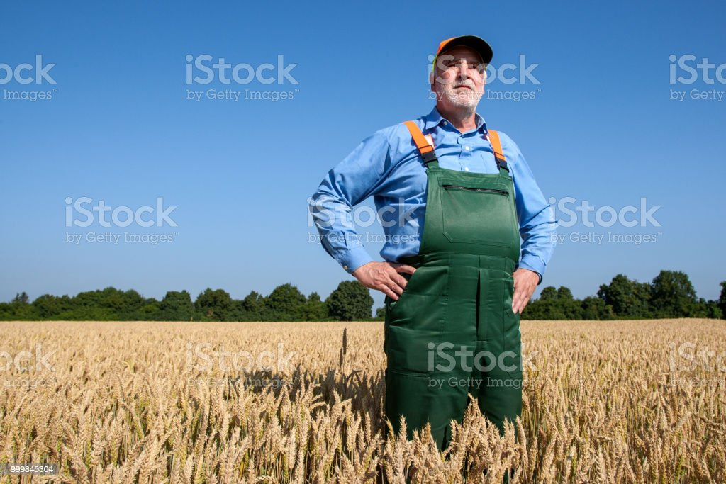 Farmer in the grain field - Royalty-free Adult Stock Photo