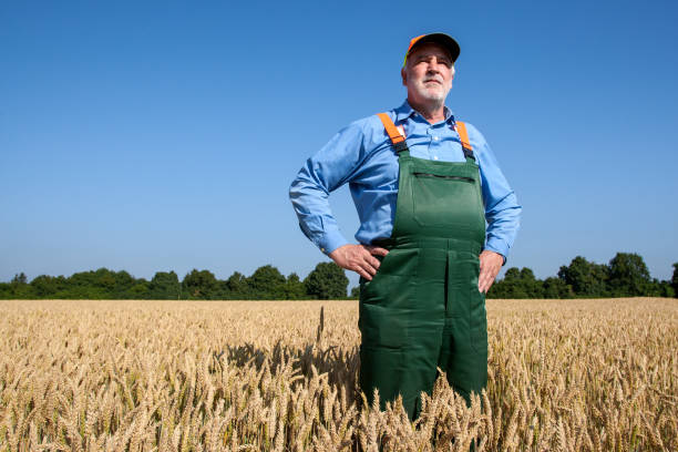 Farmer in the grain field stock photo