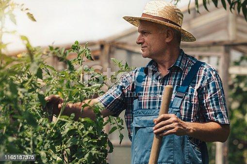 Farmer in the organic garden
