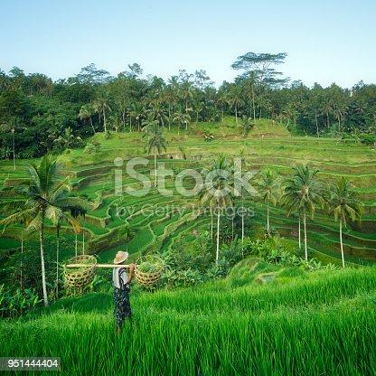 Farmer in the rice terraces of Bali, Indonesia
