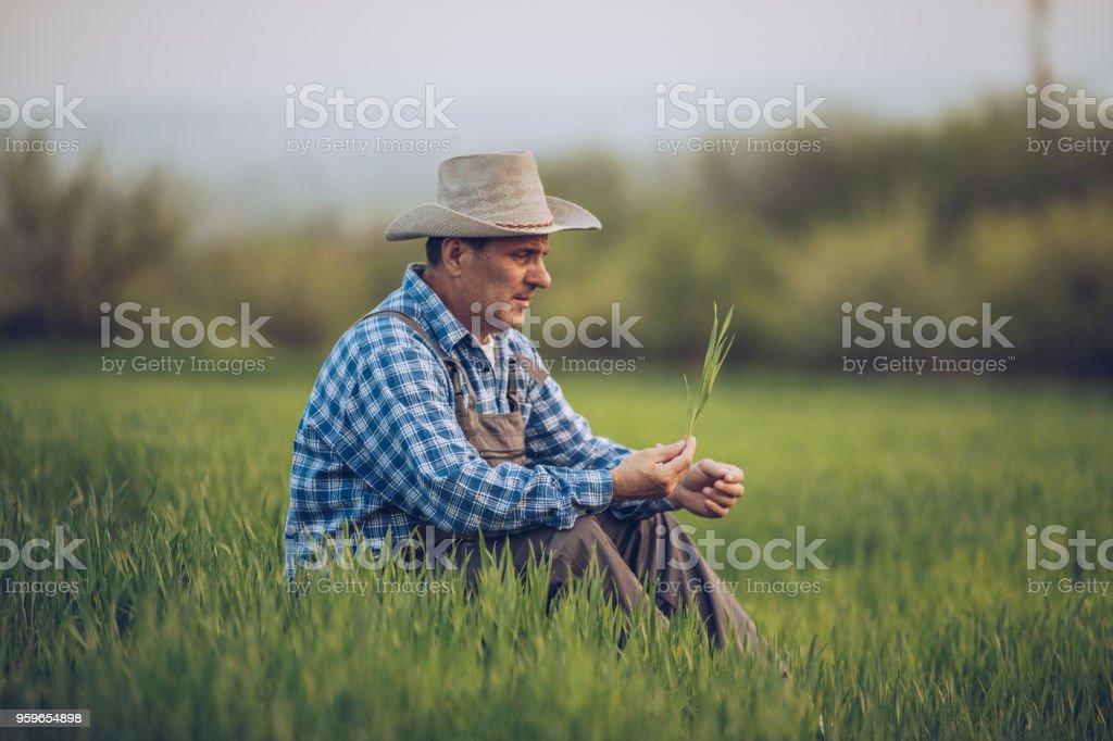 Farmer en el campo de trigo - Foto de stock de Adulto libre de derechos