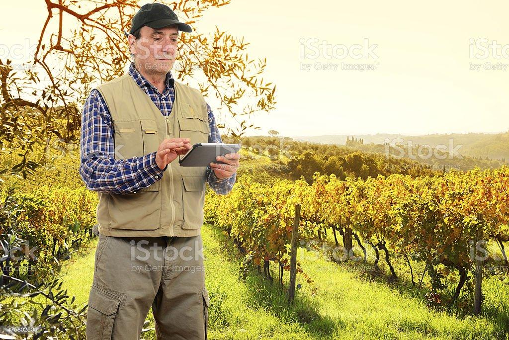 Farmer in Vineyard royalty-free stock photo