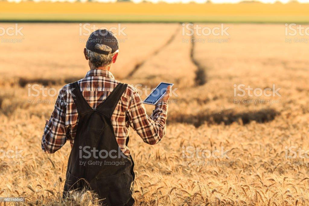Farmer in wheat field stock photo