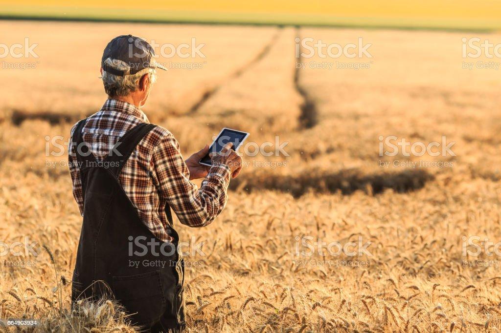 Farmer in wheat field foto stock royalty-free