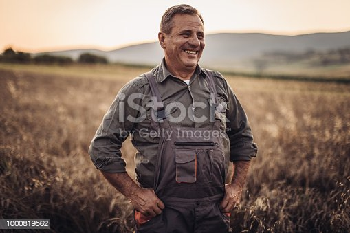 Farmer in yellow wheat meadow .Freedom concept