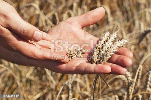 istock farmer inspecting crop 669635112