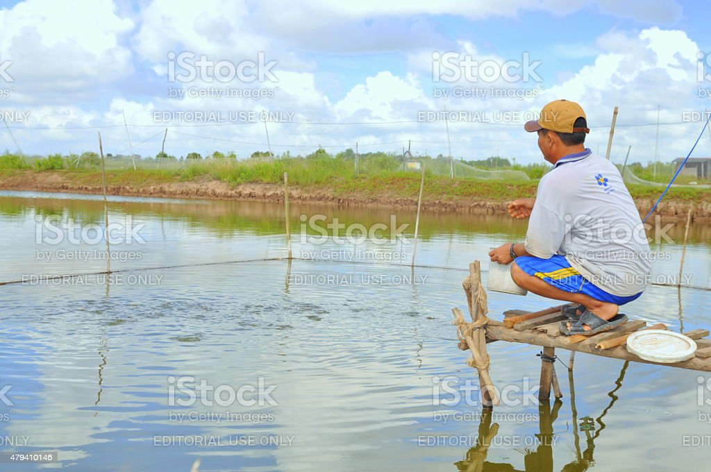 farmer is feeding fish in his small own pond stock photo