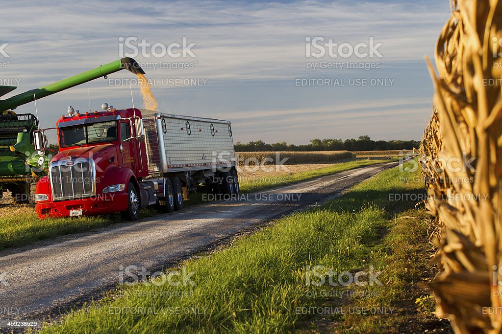 Farmer loads just harvested soybeans into trailer stock photo