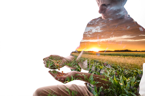Double exposure of a male farmer looking at seed in hands at cultivated field
