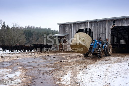 A farmer moving a hay bale to a beef cattle barn on a winter day.