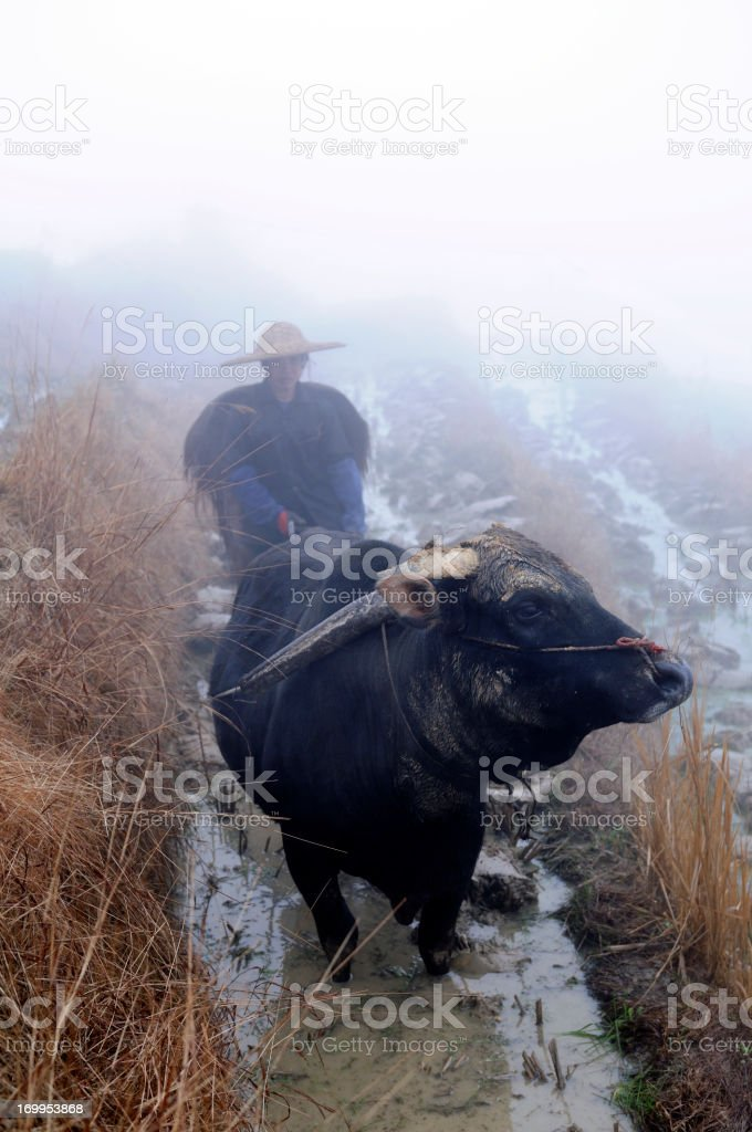 Farmer İn the Rice Field royalty-free stock photo
