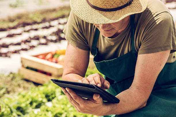 Farmer on a field with digital tablet stock photo