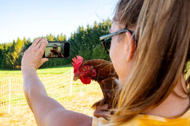 ein bauer auf einem bio-bauernhof nehmen eine selfie mit einem huhn.  reale person. - lustiges huhn bilder stock-fotos und bilder