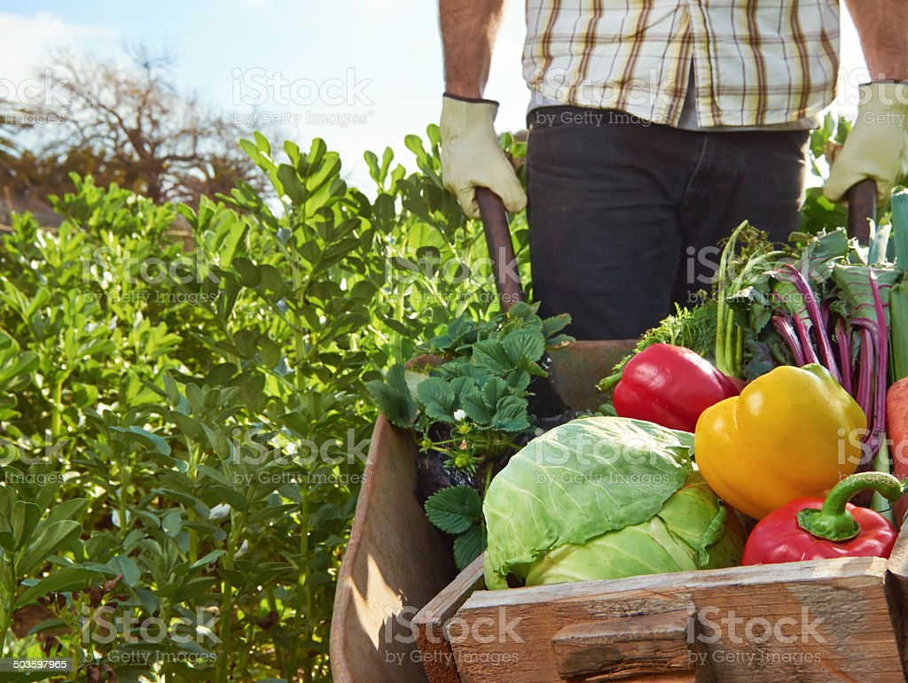Farmer on local sustainable organic farm stock photo
