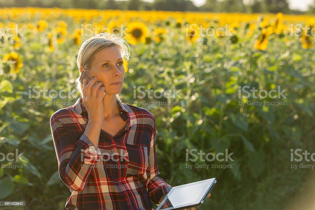 farmer on phone in a sunflower field stock photo