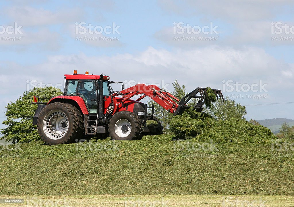 Farmer on Tractor packing down silage stack royalty-free stock photo