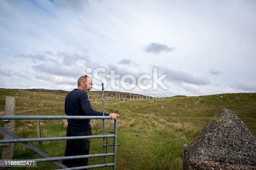 A farmer opens the gate to feed his Highland Cattle inside a protected pasture on the moor. Highland cattle, or hairy coos, are a distinctive pedigree breed with long, thick flowing hair and sweeping horns that date from 1884 that thrive in difficult climates and conditions, Isle of Lewis, Outer Hebrides, Scotland, UK, Europe
