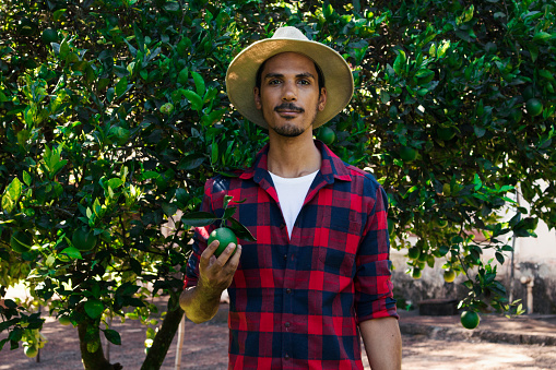 Farmer or worker with hat looking for camera in front of orange tree.