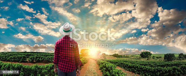 istock Farmer or working with hat on coffee field at sunset field 955886114