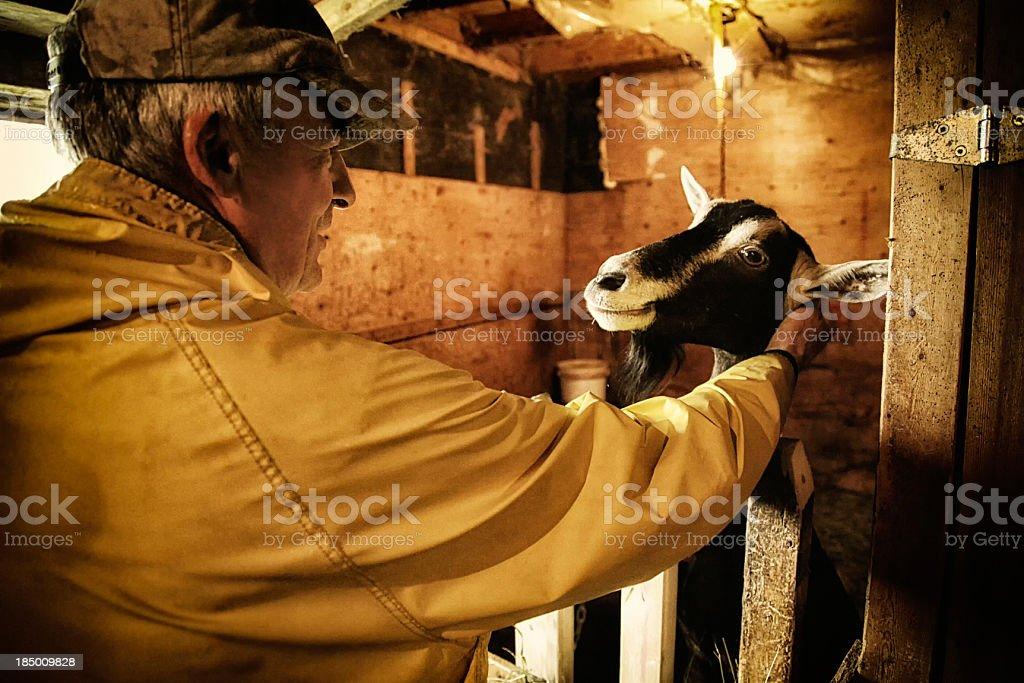 Farmer petting his goat stock photo