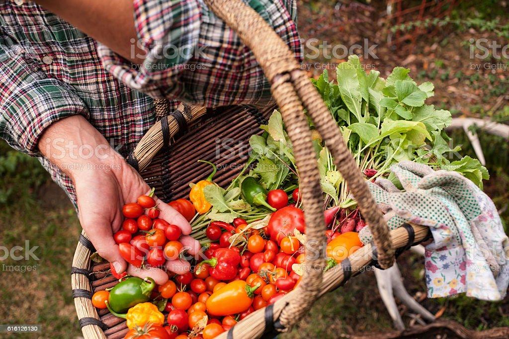 Farmer picked fresh vegetables stock photo