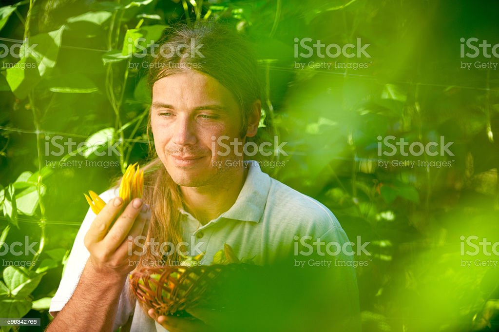 Farmer picking up Zucchini Flower royalty-free stock photo
