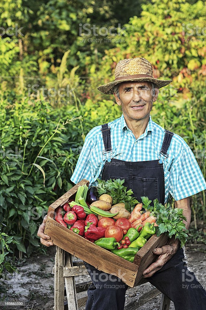 Farmer Picking Vegetables stock photo