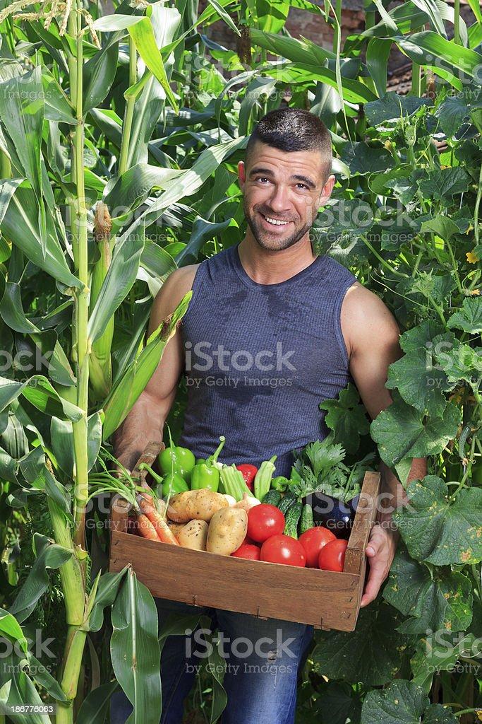 Farmer Picking Vegetables royalty-free stock photo