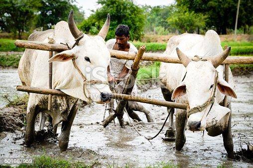 Indian farmer in the field