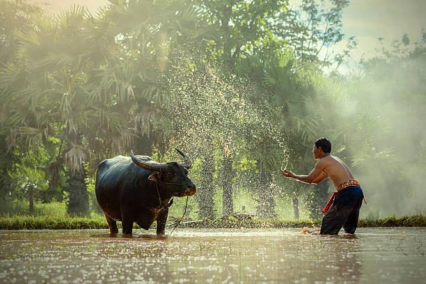 farmer. - laos stock-fotos und bilder