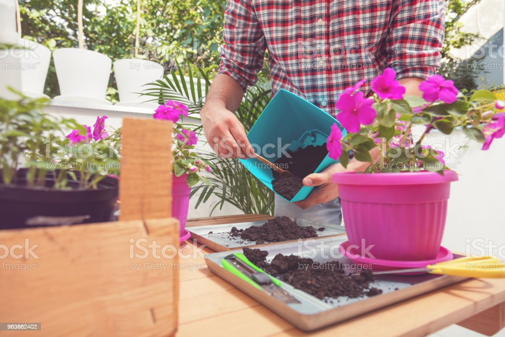 Farmer planting young seedlings of flowers. Gardening concept. - Royalty-free Adult Stock Photo