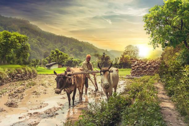 Landwirt Pflügen Reisfeld bei Sonnenaufgang – Foto