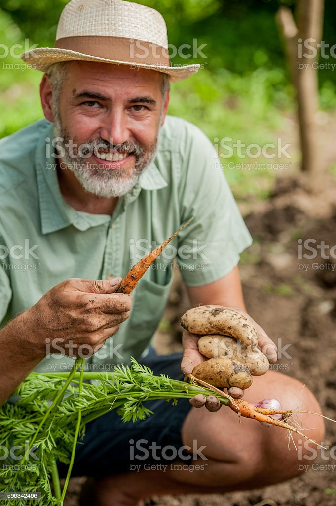 Farmer Posing With Hands Full of Vegetables royalty-free stock photo