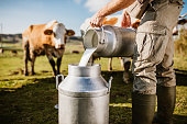 istock Farmer pouring raw milk into container 1297005217
